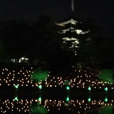 燈花会2017